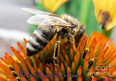 Bee Art Print by Olivia Narius