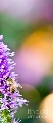 Still Life Photograph - Bee On Lavender by Patricia Bainter