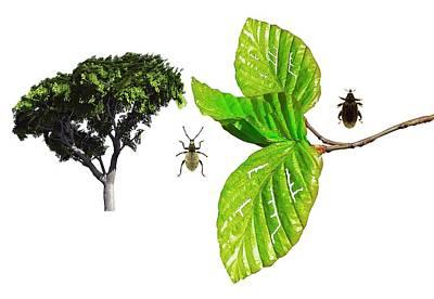 Beetle Photograph - Beech Beetles by Mikkel Juul Jensen
