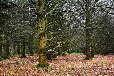 Photograph - Beech Wood In Winter by Jane McIlroy