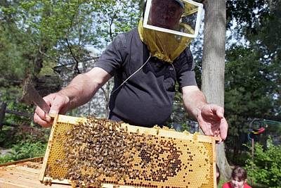 Beekeeping Class Art Print by Jim West