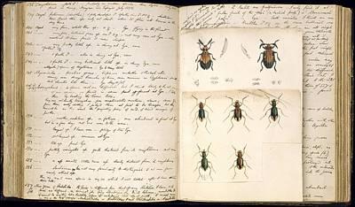 Beetles, 18th Century Illustration Art Print