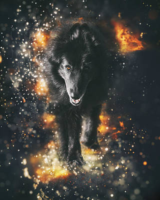 Sheepdog Photograph - Belgian Sheepdog Art by Wolf Shadow  Photography