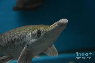 Photograph - Belle Isle Aquarium Fish by Randy J Heath