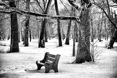 Photograph - Bench Under The Tree by John Rizzuto