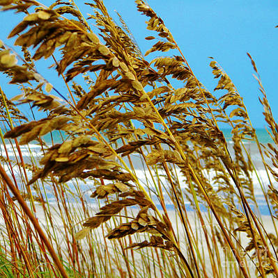 Photograph - Beyond The Sea Oats Lies Eternity by Lorraine Heath