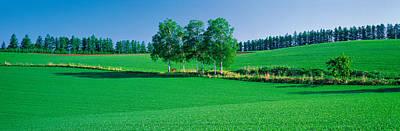 Treeline Photograph - Biei-cho Hokkaido Japan by Panoramic Images