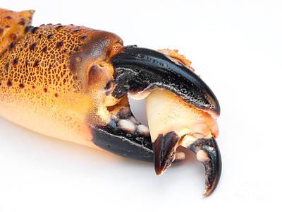 Crawfish Photograph - Big Eats Small by Sinisa Botas