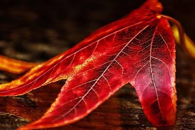 Photograph - Big Red by Beth Akerman