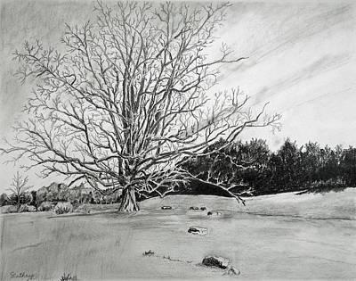 Big Tree Art Print by Christine Lathrop