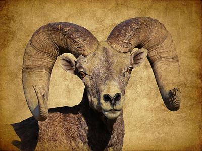 Photograph - Bighorn Sheep Iv by Athena Mckinzie