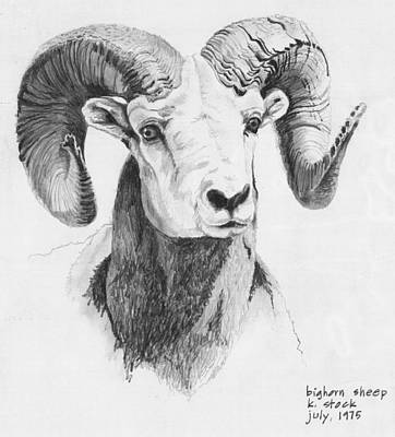 Long horn sheep coloring pages ~ Bighorn Sheep Drawing by Kenneth Stock
