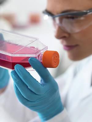 Technician Photograph - Biologist With Stem Cells by Tek Image