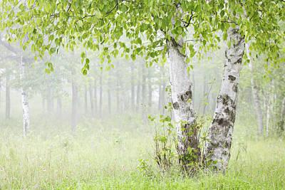 Photograph - Birch Trees In Fog Thunder Bay Ontario by Susan Dykstra