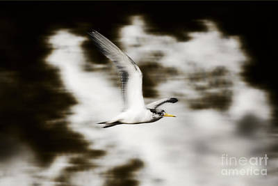 Bird Flying In The Clouds Art Print by Jorgo Photography - Wall Art Gallery