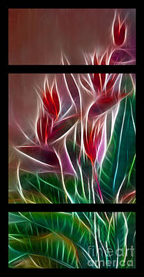 Bird Of Paradise Fractal Art Print