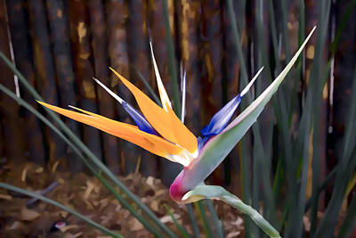 Digital Art - Bird Of Paradise by Photographic Art by Russel Ray Photos
