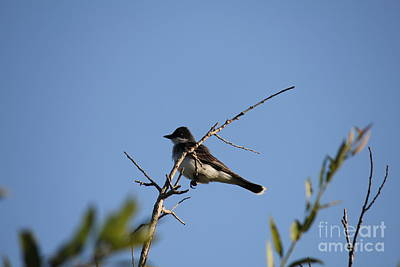 Photograph - Bird On A Branch by Donna L Munro