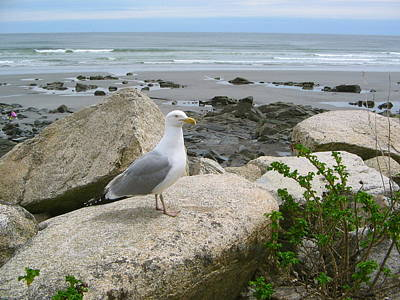 Photograph - Bird On A Rock  by Denise Mazzocco