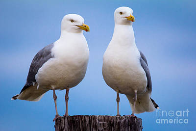 Photograph - Birds Of A Feather by Ursula Lawrence