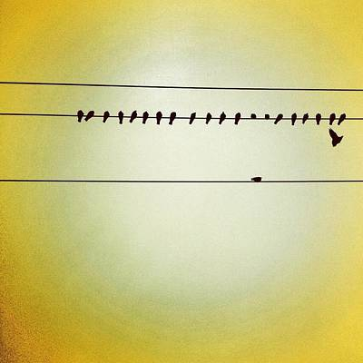 Wall Art - Photograph - Birds On A Wire by Julie Gebhardt