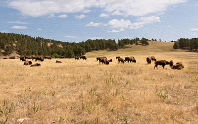 Photograph - Bison Grazing by John M Bailey