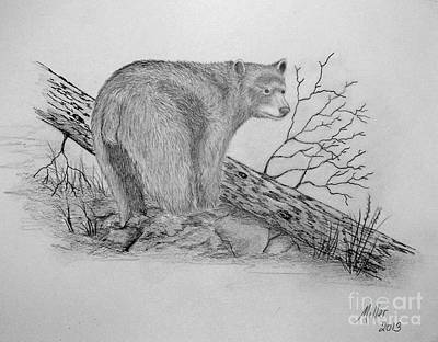 Drawing - Black Bear by Peggy Miller