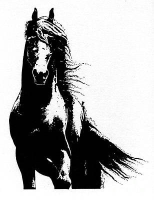 Drawing - Black Beauty  by Kate Black