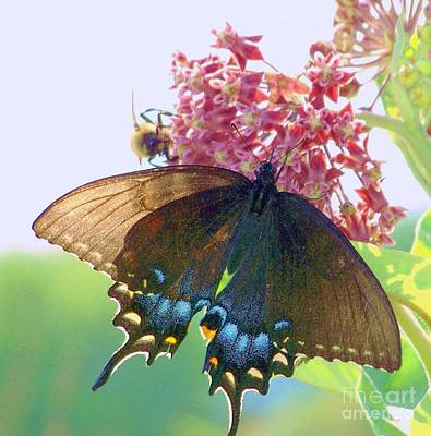 Photograph - Black Butterfly by Shirley Moravec