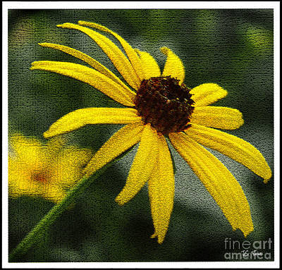 Photograph - Black Eyed Susan  by James C Thomas