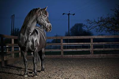 Animals Photos - Black Fiesian Horse by Samuel Whitton