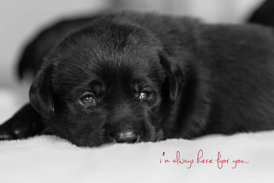 Black Lab Puppy Original