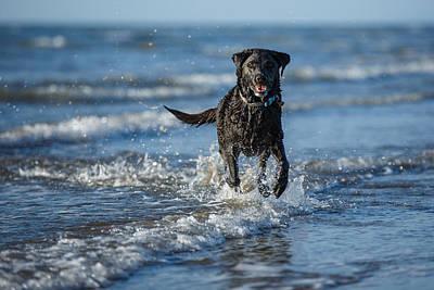 Buy Dog Art Photograph - Black Labrador On The Beach by Izzy Standbridge