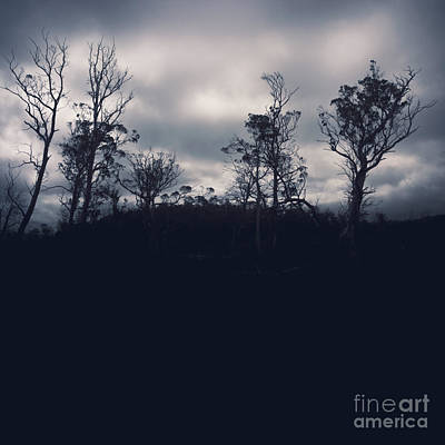 Black Silhouette Trees In Spooky Tasmanian Forest Print by Jorgo Photography - Wall Art Gallery