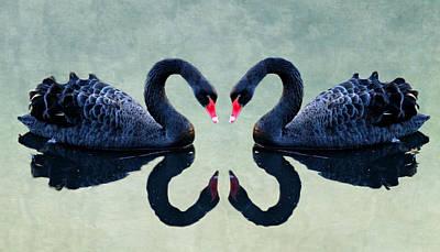 Swan Mixed Media - Black Swan by Heike Hultsch