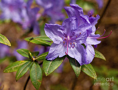 Photograph - Blaney's Blue by Chris Anderson