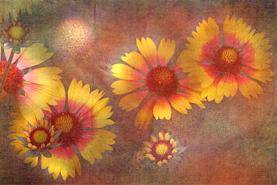 Yellow And Orange Sunflower Photograph - Blanket Flowers by Angie Vogel