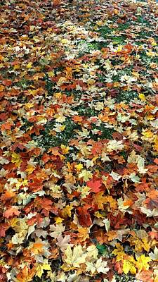 Photograph - Blanket Of Fallen Leaves by Kenny Glover