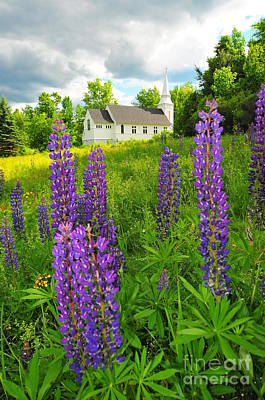 Blessed Are The Lupine II Art Print by Catherine Reusch Daley