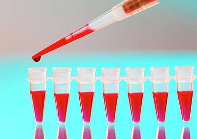 Group Of Seven Photograph - Blood Testing by Wladimir Bulgar
