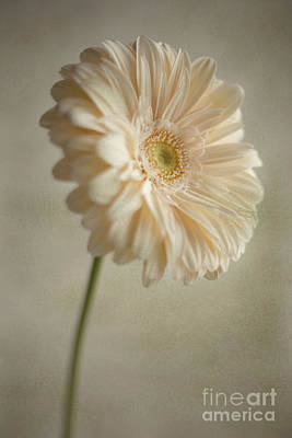 Photograph - Blooming by Aiolos Greek Collections