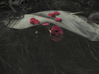 Blossom Rain 29 Art Print by Georg Kickinger