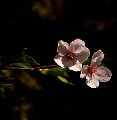 Photograph - Blossoms  by Kathi Isserman