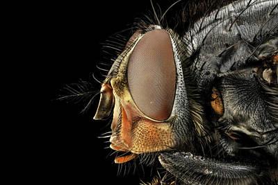 Blowfly Head Art Print