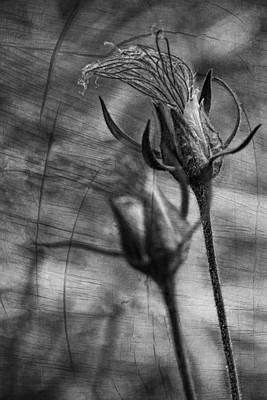 Photograph - Blowin' In The Wind by Theo O'Connor