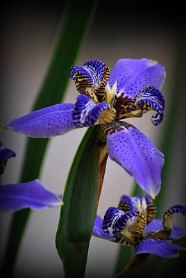 Photograph - Blue by Amee Cave