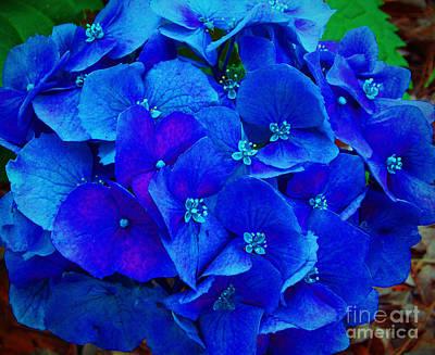 Blue Beauty Art Print by Annette Allman