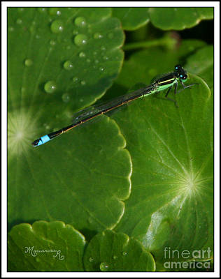 Photograph - Blue Dragonfly by Mariarosa Rockefeller