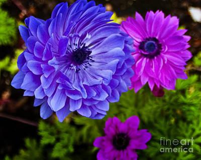 Blue Flower Art Print by Michael Fisher