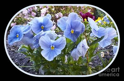 Photograph - Blue Flowers Framed by Cindy New